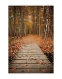 Woodland Path Prints by Michael Hudson