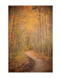Winding Autumn Path Giclee Print by Michael Hudson