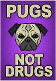 Pugs Not Drugs Fotky