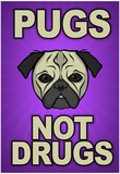Pugs Not Drugs Print