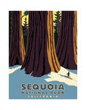 Sequoia Impresso gicle por Steve Forney