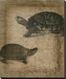 Tandem Tortoise II Stretched Canvas Print