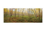 Birch Forest Panorama Posters by Michael Hudson