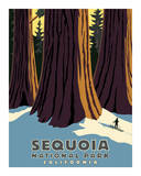 Sequoia Giclee Print by Steve Forney