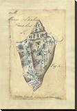 Seashell Ephemera VI Stretched Canvas Print by Chariklia Zarris