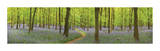 Bluebell Woods Panorama Giclee Print by Michael Hudson