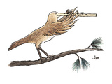 bird's extended, flute-like beak is played as an instrument - Cartoon Regular Giclee Print by John Jonik
