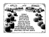 The similarities between apples and oranges. - New Yorker Cartoon Premium Giclee Print by John Jonik
