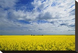 Canola and Graineries Stretched Canvas Print by Mike Grandmaison