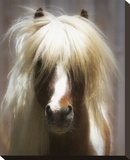 Shetland Pony Stretched Canvas Print by Melanie Snowhite
