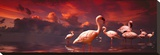 Flamingo Sunset Stretched Canvas Print by Richard Desmarais