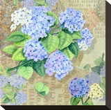Blue Hydrangea II Stretched Canvas Print by Roberta Collier Morales