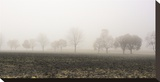 Tree Line in Fog Stretched Canvas Print by Richard Desmarais