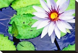 Water Lilly II Stretched Canvas Print by Jan Michael Ringlever