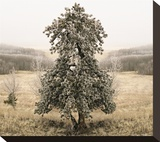 Frost Covered Lone Tree Stretched Canvas Print by Richard Desmarais