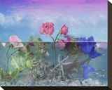 Roses in the Water Garden Stretched Canvas Print by Christine Simpson