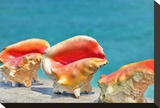 Three Conchs Stretched Canvas Print by Jan Michael Ringlever