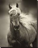 Palomino Stretched Canvas Print by Melanie Snowhite