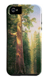 The Big Trees, Mariposa Grove, California iPhone 5 Case by Albert Bierstadt