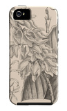 Orchid on Khaki III iPhone 5 Case by Samuel Curtis