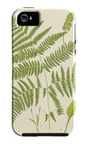 Ferns with Platemark I iPhone 5 Case