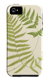 Ferns with Platemark V iPhone 5 Case