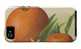 Orange Study II iPhone 5 Case