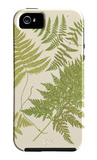 Ferns with Platemark VI iPhone 5 Case