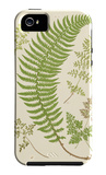 Ferns with Platemark IV iPhone 5 Case