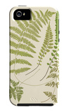 Ferns with Platemark II iPhone 5 Case