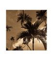 Palmier Affiches par Jean-François Dupuis