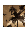 Palm Tree Prints by Jean-François Dupuis