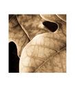Leaves Posters by Jean-François Dupuis