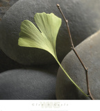 Gingko Prints by Glen & Gayle Wans