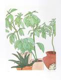 Still Life, Plants Limited Edition by Vasilios Janopoulos