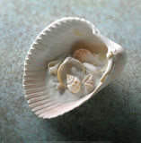 Shells in Shell Prints by Glen & Gayle Wans