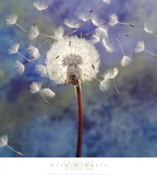 Dandelion Posters by Glen & Gayle Wans