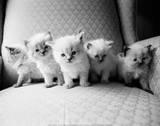 5匹の子猫 ポスター : キム・レビン