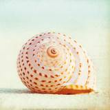Seashell Voices Print by Carolyn Cochrane