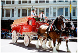 Budweiser Clydesdales Archival Photo Poster Posters