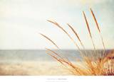 Warm Breeze Posters by Carolyn Cochrane