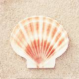 Scallop Shell Prints by Carolyn Cochrane