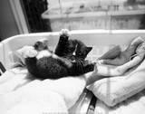 Kitten Laundry 高品質プリント : キム・レビン