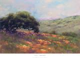 Poppy Hill Art by Alice Weil