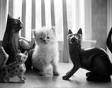 Ragdoll Kitten Posters by Kim Levin