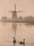 Swans and Windmill, Texel, Netherlands Photographic Print by Frans Lanting