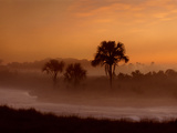 Savanna at Dawn, Emas National Park, Brazil Photographic Print by Frans Lanting