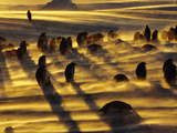 Emperor Penguins in Blizzard, Aptenodytes Forsteri, Weddell Sea, Antarctica Photographic Print by Frans Lanting