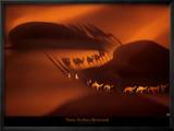 Dromedary Caravan near Nouakchott, Mauritania Poster af Yann Arthus-Bertrand
