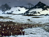 King Penguin Colony, Aptenodytes Patagonicus, South Georgia Island Photographic Print by Frans Lanting